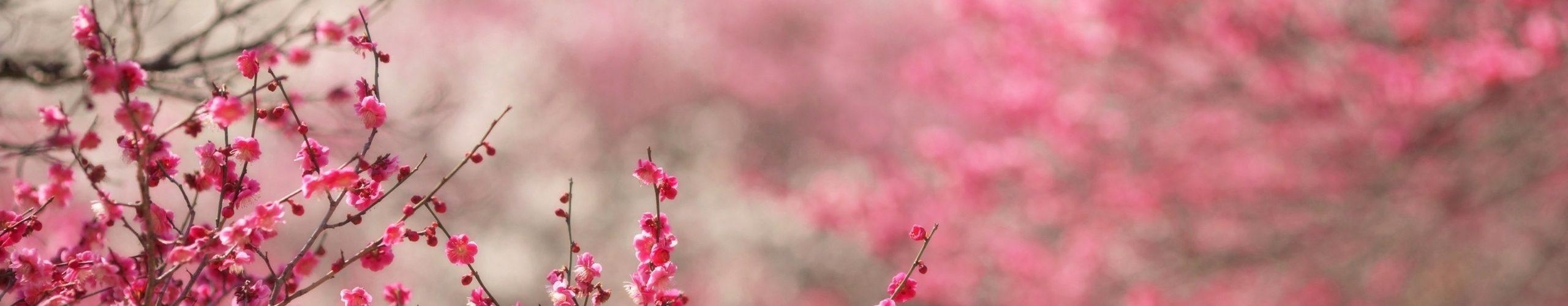 asti primavera